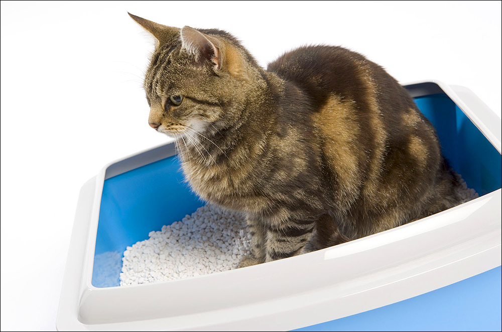 "TOSSING THE LITTER: Many cat litters contain significant amounts of silica dust, chemical fragrances and, in ""clumping"" cat litters, sodium bentonite clay, which can be derived from destructive strip mining and can cause gastrointestinal distress in cats that can lead to death. (Photo courtesy BananaStock/Thinkstock)"