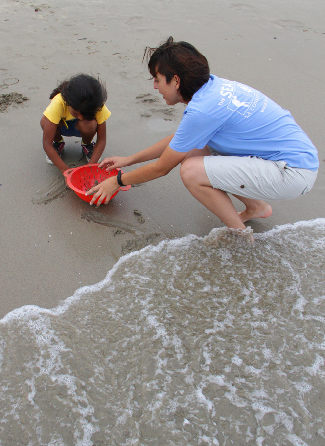 COOL CLASSROOM: A Heal the Bay volunteer (right) helps a student from Baldwin Park's Central Elementary School sift through the sand Tuesday for sand crabs during the Santa Monica-based nonprofit's Coastal Cleanup Education Day at Santa Monica Beach.  (Daniel Archuleta daniela@smdp.com)