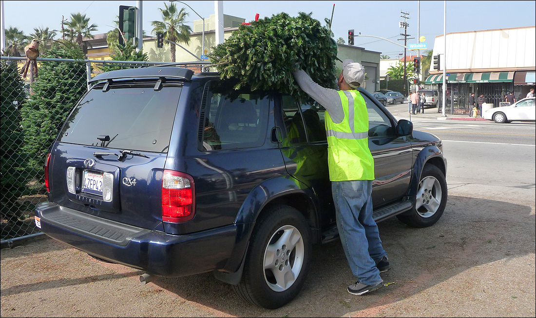 A worker at Shawn's Christmas Tree Lot loads a tree onto a car on Sunday. (Photo by Ashley Archibald)