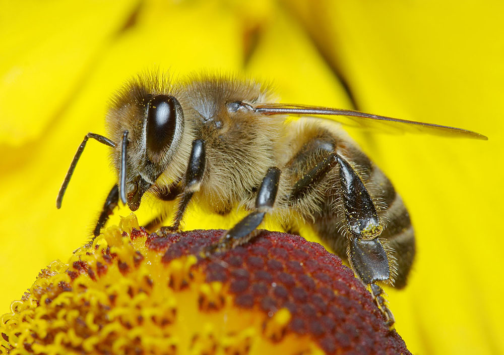 BUZZ: Attracting bees and butterflies to a garden is a noble pursuit, given that we all depend on these species and others to pollinate the plants that provide us with so much of our food, shelter and other necessities of life. (Photo courtesy iStockPhoto)