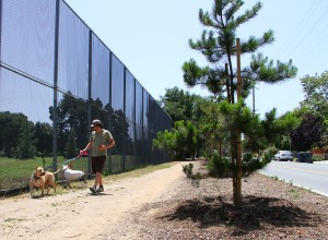 A man walks his dog past a pine tree on Dewey Street on Thursday. (Photo by Daniel Archuleta)