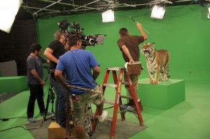 A crew from Green Screen Animals films a tiger. (Photo courtesy greenscreenanimals.com)