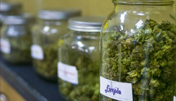 Jars filled with marijuana for medicinal use fill the shelves at a Venice collective. (File photo)