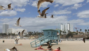 A flock of birds fly over Santa Monica Beach earlier this year.