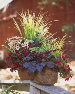 VIBRANT: Creating a festive fall bowl is a great way to introduce color into a balcony garden. (Photo courtesy Armstrong Garden Centers)