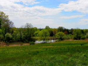 Several organizations help private landowners create legal protections against commercial development on their lands, which aren't just those our houses are on but include commercial, industrial and agricultural lands, too. Pictured: The Gwynedd Wildlife Preserve in Ambler, Pennsylvania. It's fields are being restored and protected after over a century of agricultural use. (Photo courtesy amdougherty/Flickr)
