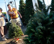 LOOKING: Barney Hernandez (right) and his wife Sandy search for a Christmas tree. (File photo)