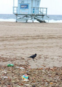 The first rain storm of the season left a wide swath of garbage on Santa Monica State Beach. (Daniel Archuleta daniela@smdp.com)