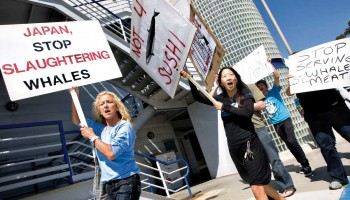 NO! Protesters held an event outside of The Hump in 2010 to denounce the use of whale meat. (File photo)