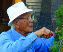MASTER on duty: Frank Goya working on a bonsai. He will be giving a talk in the Pacific Palisades on Saturday. (Photo courtesy Lloyd Garver)