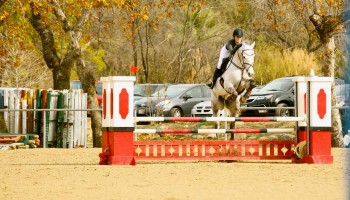 A member of the Malibu High equestrian team in action.  (Photo by Cynthia Slawter)