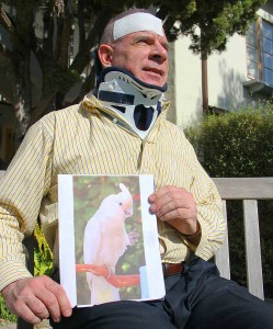 OLD BUDDIES: Peter D'Amico holds a picture of his missing parrot Mac at his apartment complex on California Avenue on Tuesday. (Daniel Archuleta daniela@smdp.com)