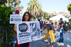 A woman protests against the pony rides and petting zoo at the Farmers' Market on Main Street on Sunday morning. (Paul Alvarez Jr. editor@smdp.com)