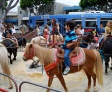 A child rides a pony at the Sunday Main Street Farmers' Market. Some want to ban it. (Photo courtesy blocksnap.com)