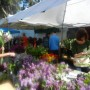 FM Suzanna at Flower Stand* farmers market